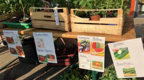 Neues Zuhause gesucht: Pflanzenverkauf der Garten Crew